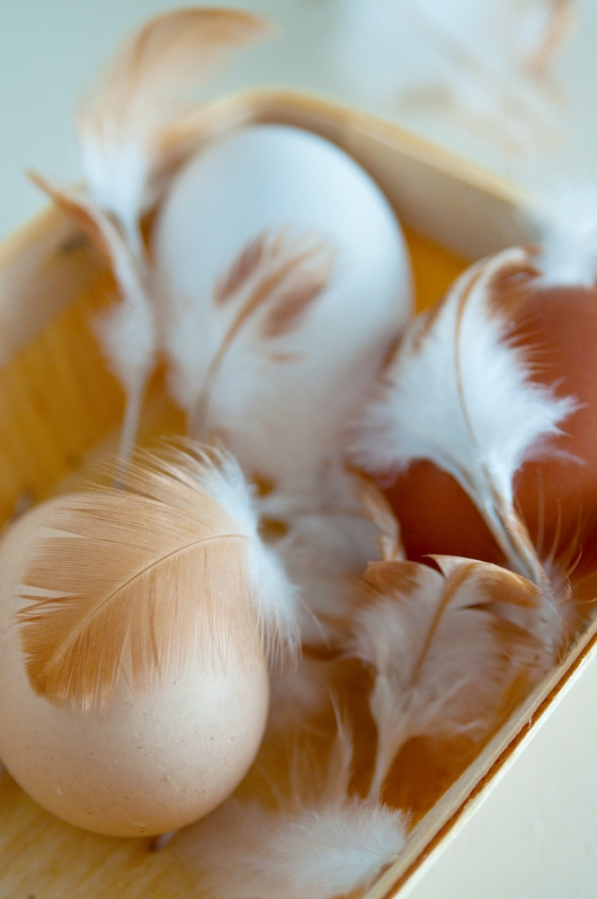 eggs_feathers_screen_6462