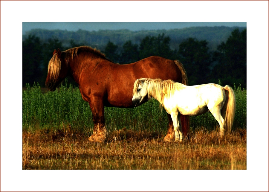 Brown & white horse2 A5