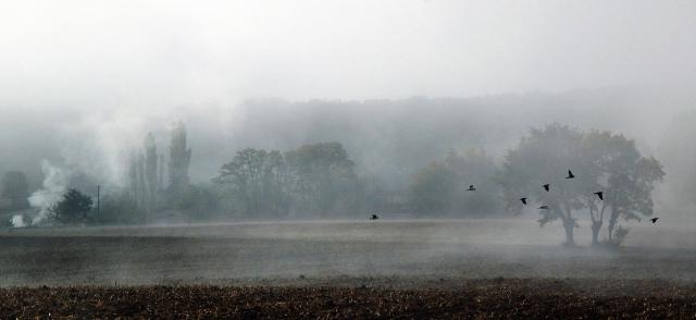 Birds in mist La M_adj