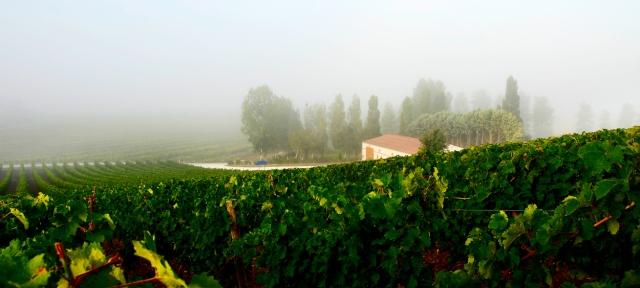 Prieure La Chaume. D200 Aug 150010 cropped