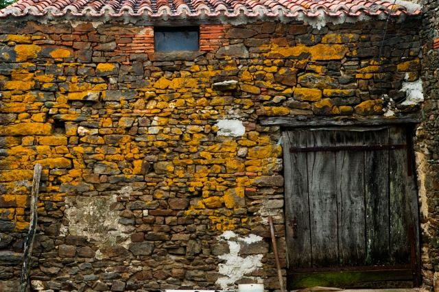 barn_wall_yellow_0261