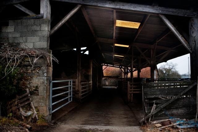 empty_cattle_barn_0299