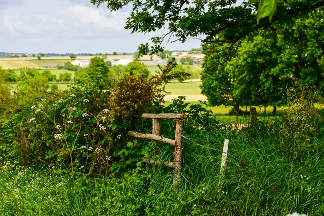 stile_hedge_may15_0837