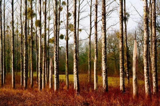 pencil_forest3_7429