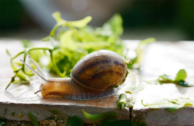snail_17jun_07