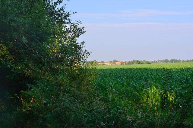 corn_fields_Epagne20jul_0005