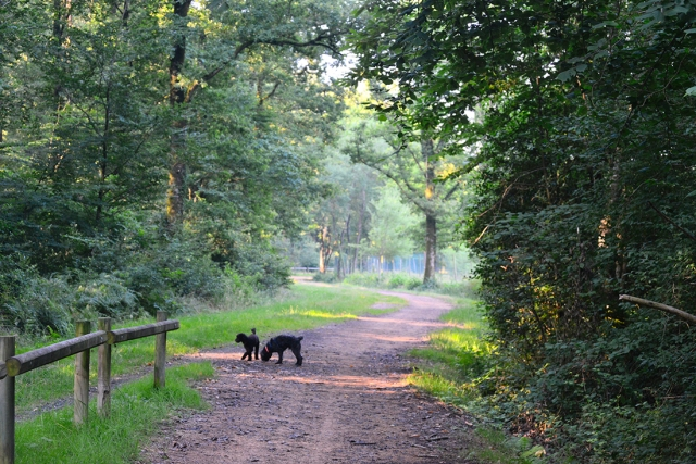 dogs_forest_20jul_0013