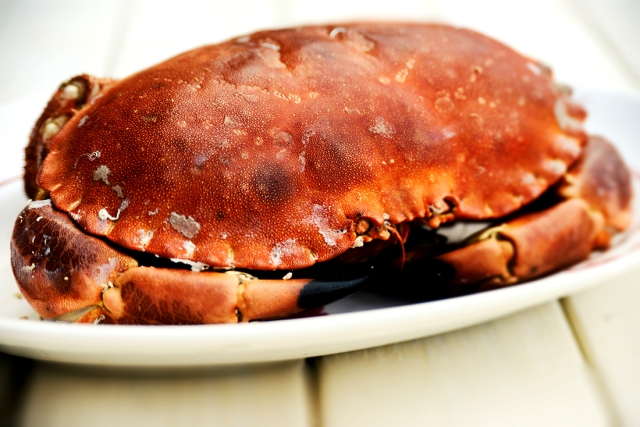 crab_contrast_0002