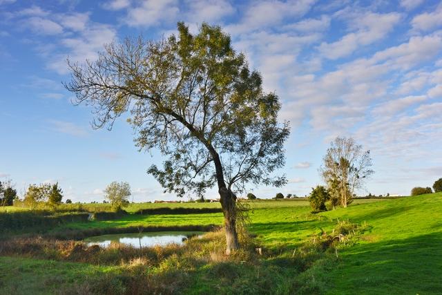 bent_tree_pond_0024