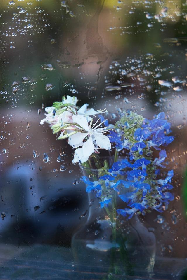 rain_window_flower5_0010