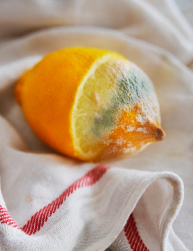 lemons4_0006