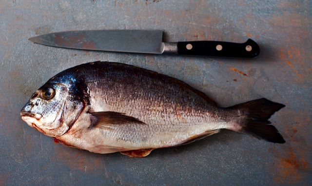 sea_bream_0014