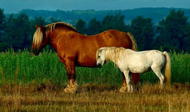 two_horses_2826jul29_2