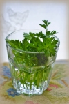 parsley_0132