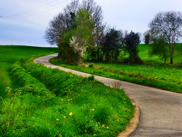 windy_lane_155913