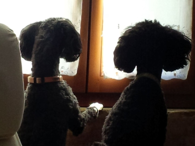 dogs_waiting_170341
