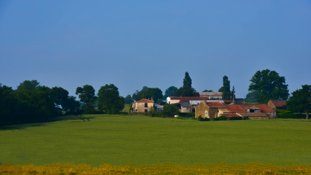 farm_fields_june_p2__0080
