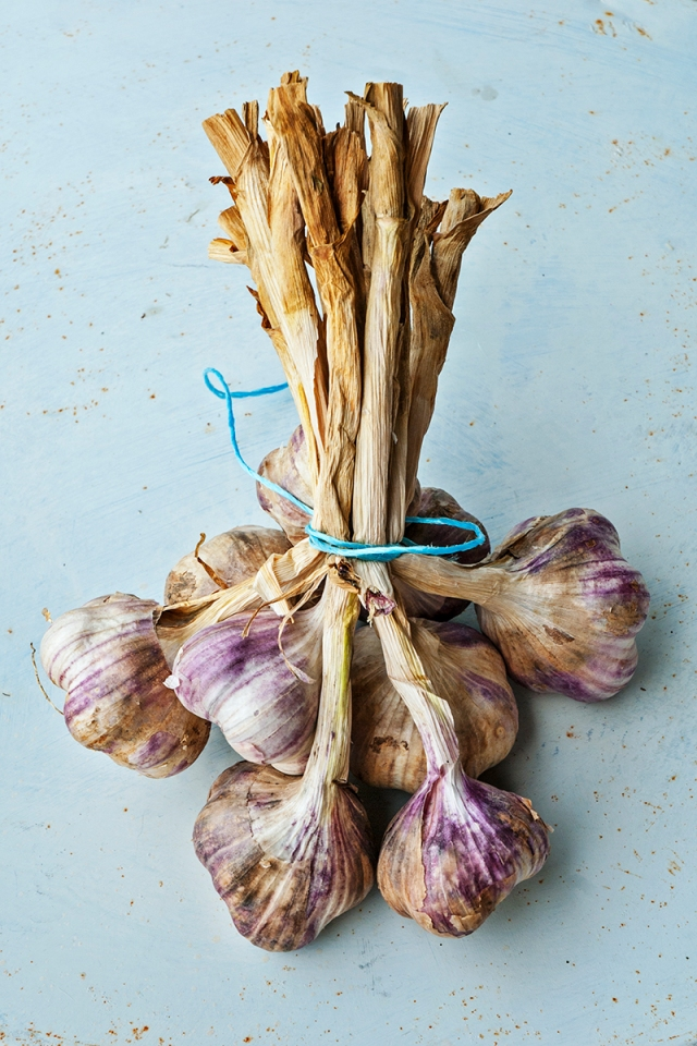 garlic_bunch_2008_0009