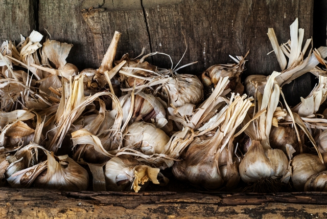 garlic_drying_couturier0002