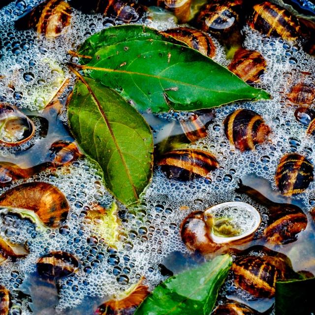 escargots_prep_0060