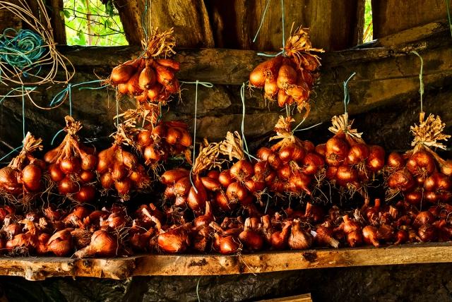 onions_garlic0002