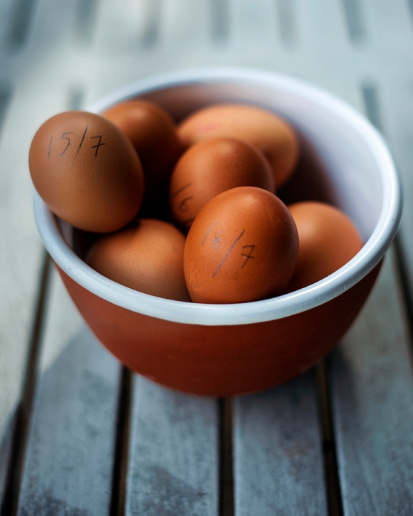 eggs_dated_cropjul17_7141