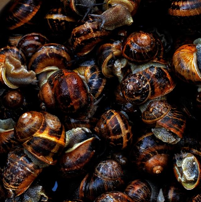 escargots_prep_0050